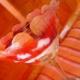 Perfecto amor de tiramisú de fresolandia