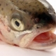 Tiradito de pescado de la Nashi