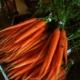 Zanahorias glacé