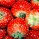 Blinis y compota de frutillas