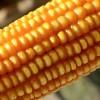 Arroz blanco con granos de maíz