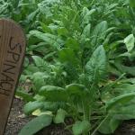 Matambre vegetal o raviolón