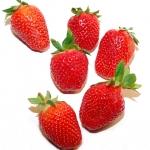 Rumtopf / Arándanos y frutillas en ron
