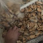 Mejillones a la provenzal